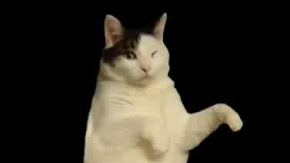 lilac tabby cat