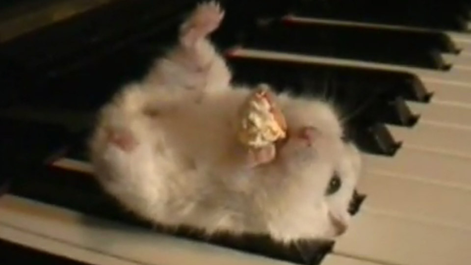 Hamster On A Piano Videos